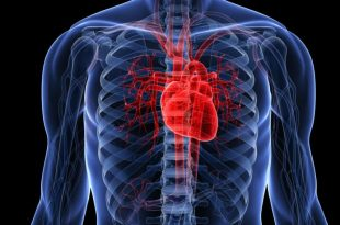 صور صور قلب الانسان , قلب الانسان و اهميته بالصور