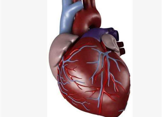 صورة صور قلب الانسان , قلب الانسان و اهميته بالصور