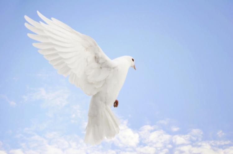 صورة صور عن السلام , السلام و مايقال عنه بالصور