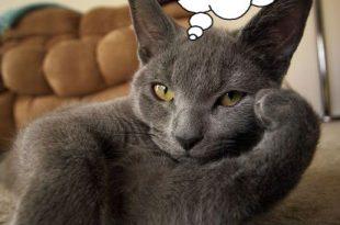 صورة صور حيوانات مضحكة , طرائف الحيوانات المضحكه بالصور