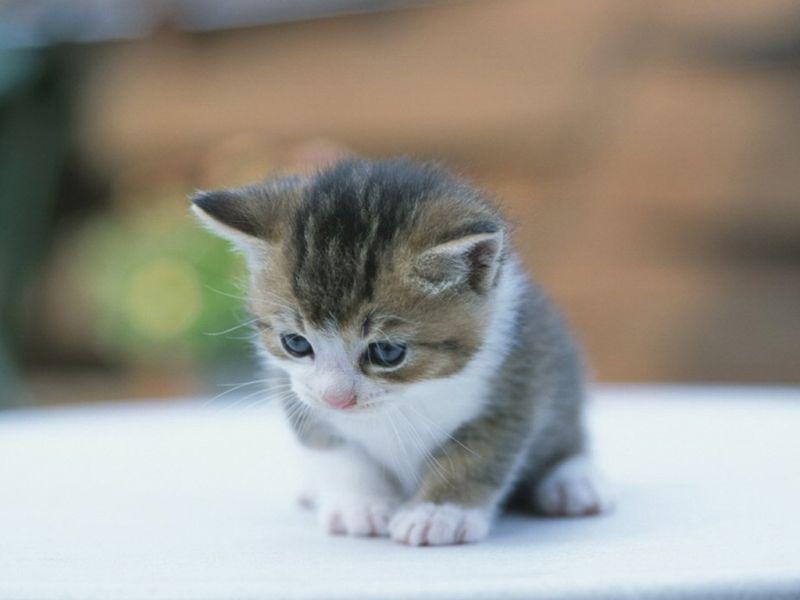 صورة صور قطط صغيرة , اجمل اشكال القطط الصغيره