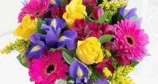 صور صور اجمل ورد , اجمل انواع الورود بالصور