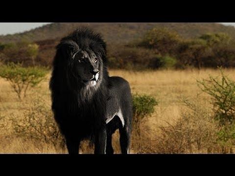 صورة اغلى حيوان في العالم , اقيم وافضل واغلي الحيوانات في العالم روعه
