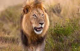 صورة صغار الحيوانات واسمائها , تعرف علي اسماء الحيوانات وصغارها