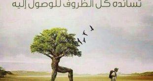 صورة حكمة الصباح , اقوال عن الصباح