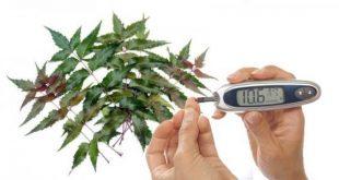 صورة علاج مرض السكر بالاعشاب , معلومات مذهلة لمرضي السكري