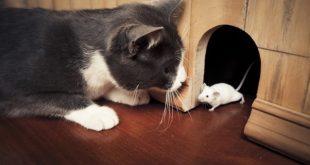 صورة رؤية القط يطارد فار في المنام , قط يجري وراء فار في الحلم