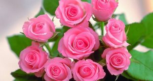 صورة زهور جميلة , صورة اجمل زهرة
