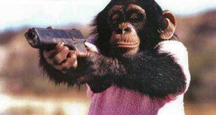 صورة اذكي الحيوانات بالترتيب , ترتيب الحيوانات الذكية