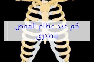 صورة عدد عظام القفص الصدري , اقسام اضلاع القفص الصدري