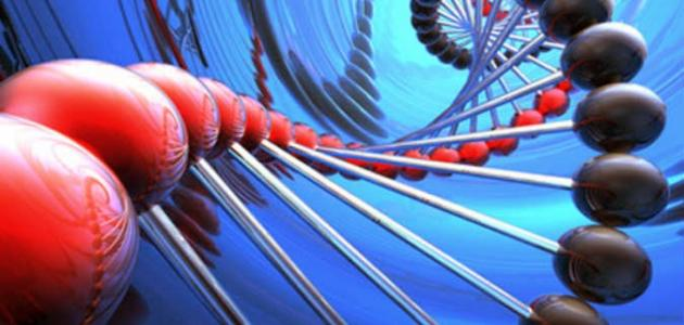 صورة تنوع خلايا جسم الانسان , اهمية خلايا الجسم