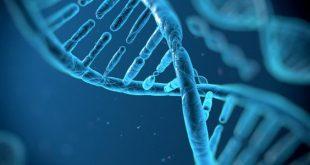 صورة وظيفة الحمض النووي , اهمية الحمض النووي