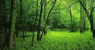 صورة فوائد الغابات وطرق حمايتها , اهمية الغابات وكيفية المحافظة عليها