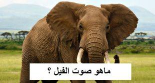 صورة اسم صوت الفيل , الفيل واسم صوته
