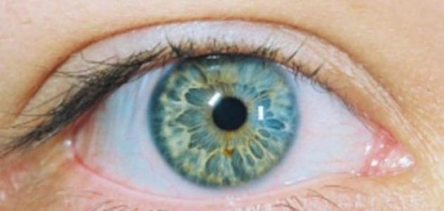 صورة تعلم لغة العيون , تعرف علي لغة العين