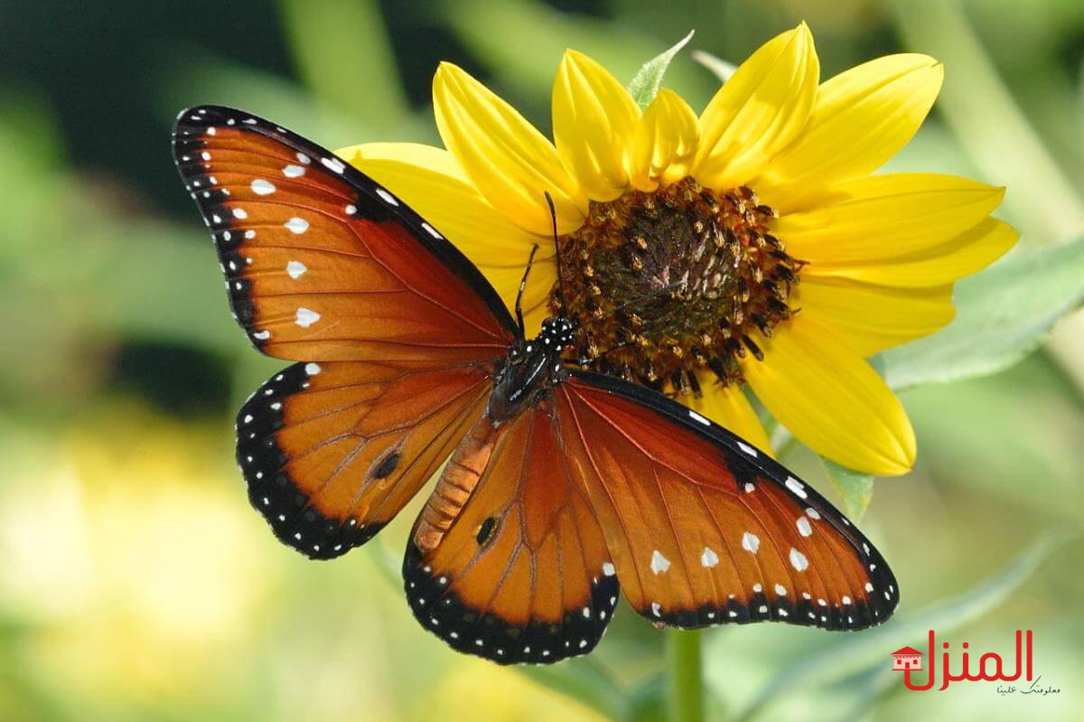صورة الفراشة في البيت 11387 2